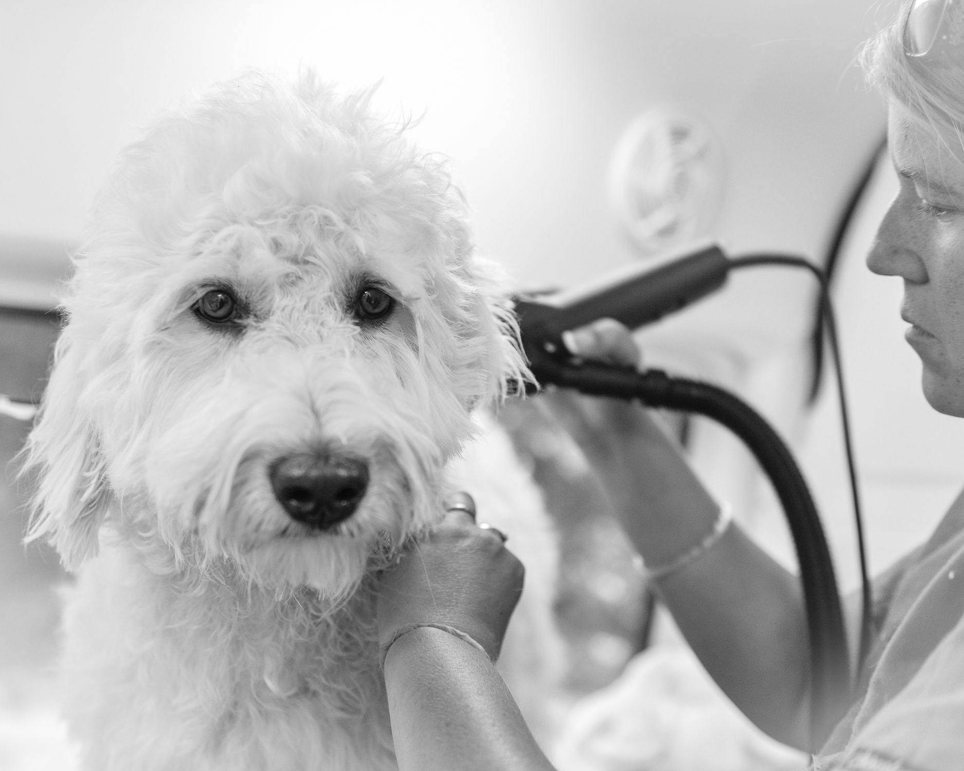Mobile Dog Grooming Belmont Nc
