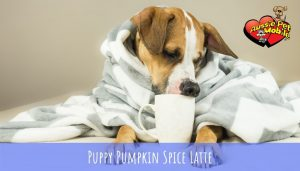 Puppy Pumpkin Spice Latte